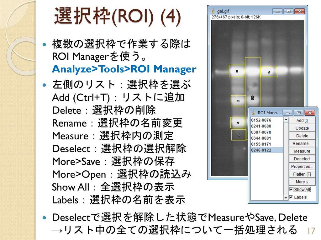 選択枠(ROI) (4) 複数の選択枠で作業する際は ROI Managerを使う。 Analyze>Tools>ROI Manager.
