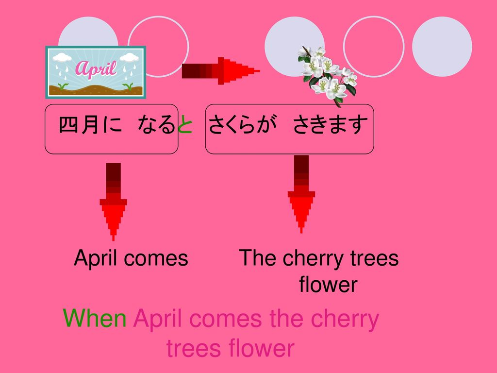 When April comes the cherry trees flower