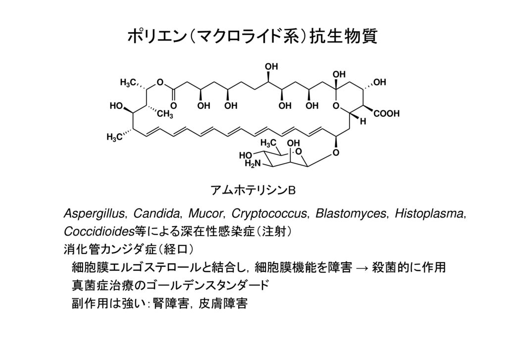 ポリエン(マクロライド系)抗生物質 アムホテリシンB