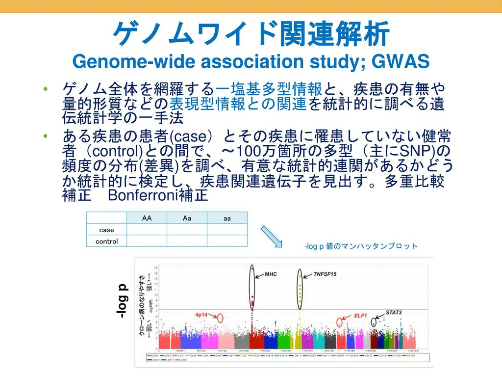 ゲノムワイド関連解析 Genome-wide association study; GWAS