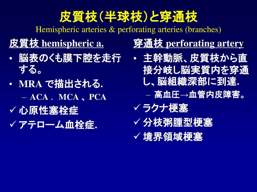 皮質枝(半球枝)と穿通枝 Hemispheric arteries & perforating arteries (branches)