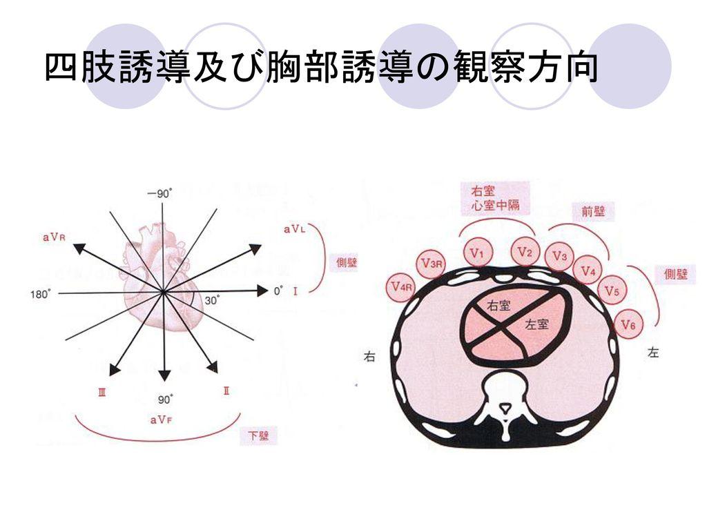 四肢誘導及び胸部誘導の観察方向