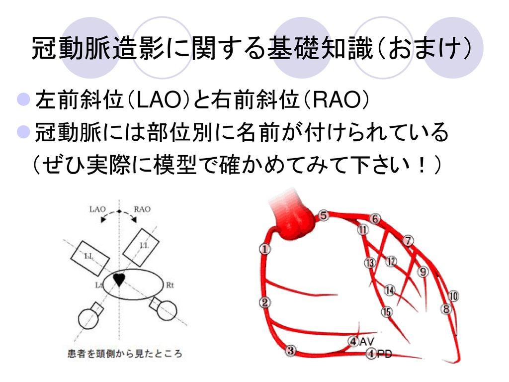 冠動脈造影に関する基礎知識(おまけ) 左前斜位(LAO)と右前斜位(RAO) 冠動脈には部位別に名前が付けられている
