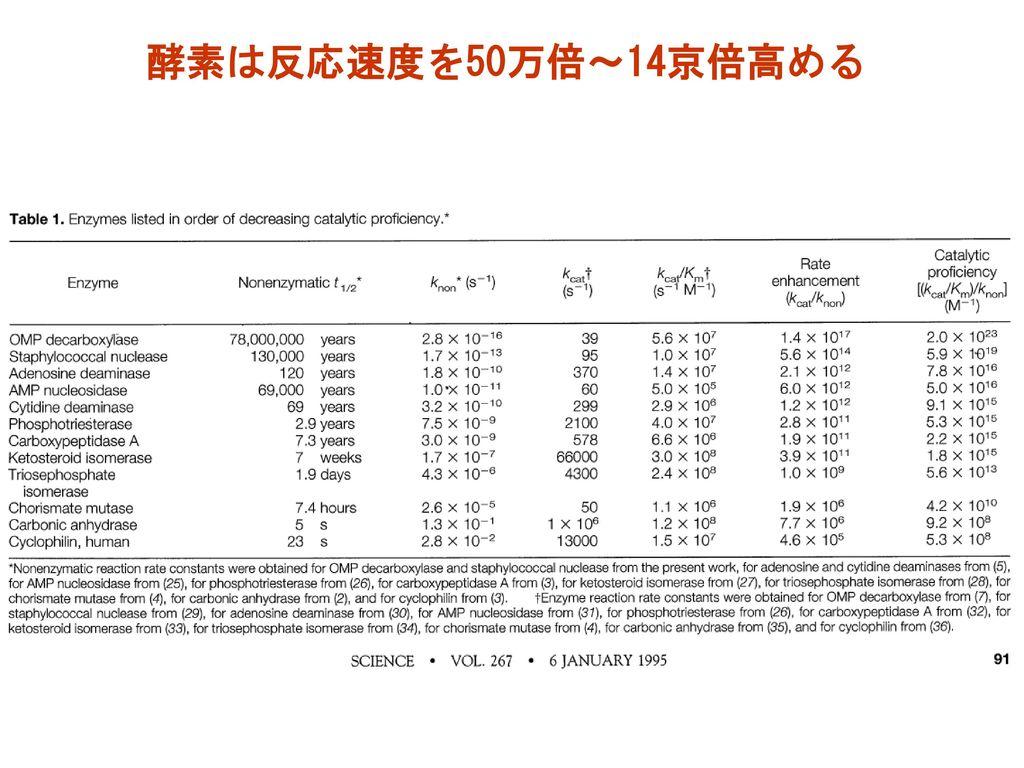 酵素は反応速度を50万倍~14京倍高める