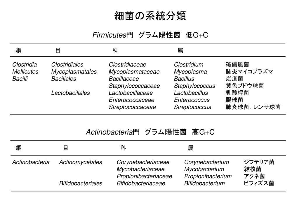 細菌の系統分類 Firmicutes門 グラム陽性菌 低G+C Actinobacteria門 グラム陽性菌 高G+C 綱 目 科 属