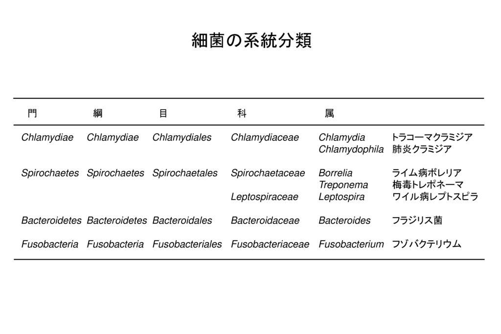 細菌の系統分類 門 綱 目 科 属. Chlamydiae Chlamydiae Chlamydiales Chlamydiaceae Chlamydia トラコーマクラミジア. Chlamydophila 肺炎クラミジア.