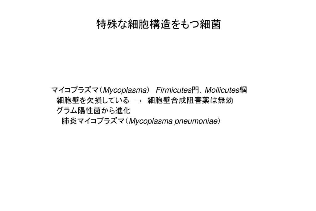 特殊な細胞構造をもつ細菌 マイコプラズマ(Mycoplasma) Firmicutes門,Mollicutes綱