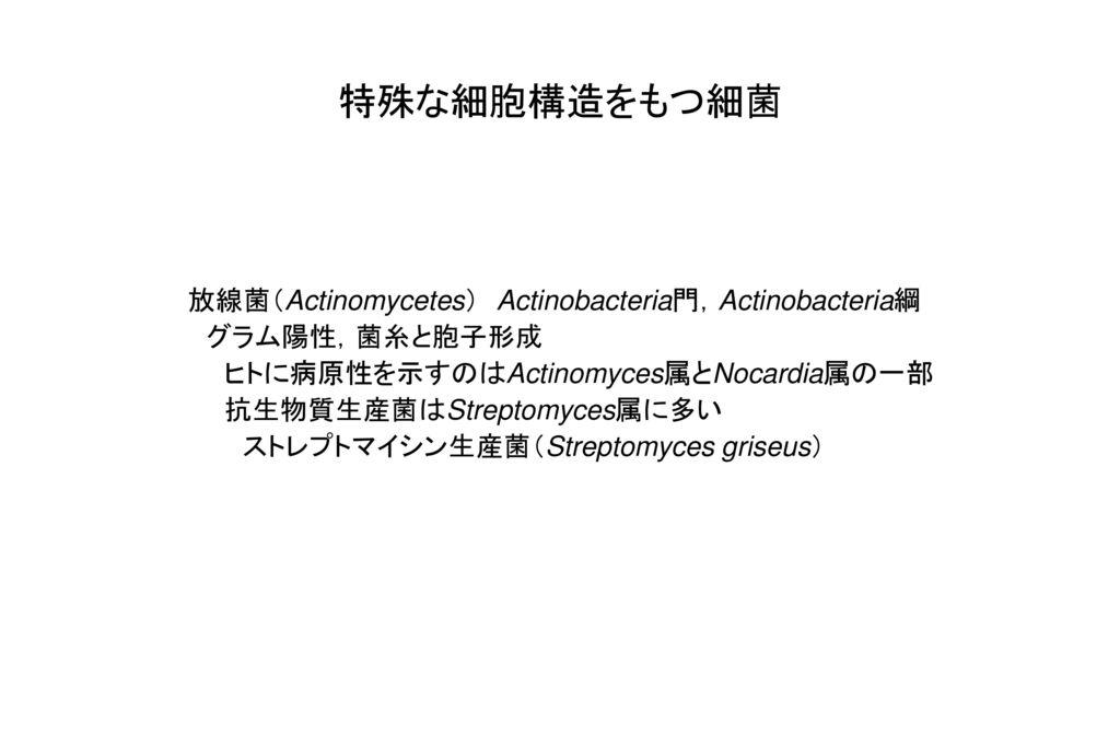 特殊な細胞構造をもつ細菌 放線菌(Actinomycetes) Actinobacteria門,Actinobacteria綱