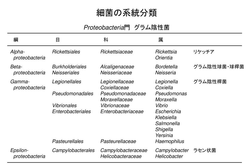細菌の系統分類 Proteobacteria門 グラム陰性菌 綱 目 科 属
