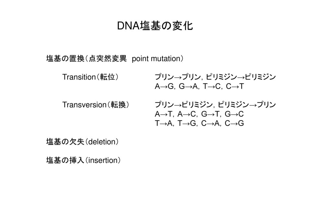 DNA塩基の変化 塩基の置換(点突然変異 point mutation)