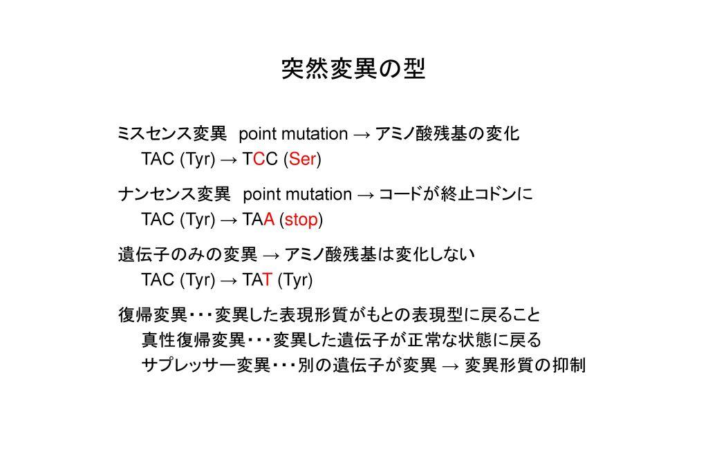 突然変異の型 ミスセンス変異 point mutation → アミノ酸残基の変化 TAC (Tyr) → TCC (Ser)