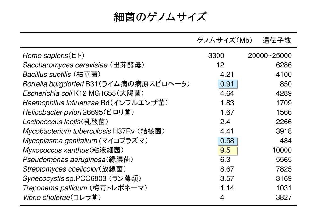 細菌のゲノムサイズ ゲノムサイズ(Mb) 遺伝子数 Homo sapiens(ヒト) 3300 20000~25000