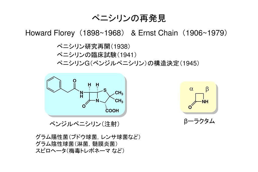 ペニシリンの再発見 Howard Florey(1898~1968) & Ernst Chain(1906~1979)