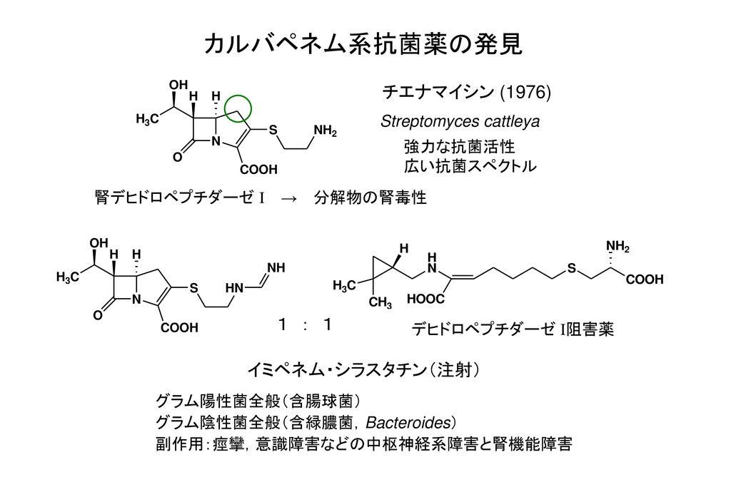 カルバペネム系抗菌薬の発見 チエナマイシン (1976) 1 : 1 イミペネム・シラスタチン(注射)