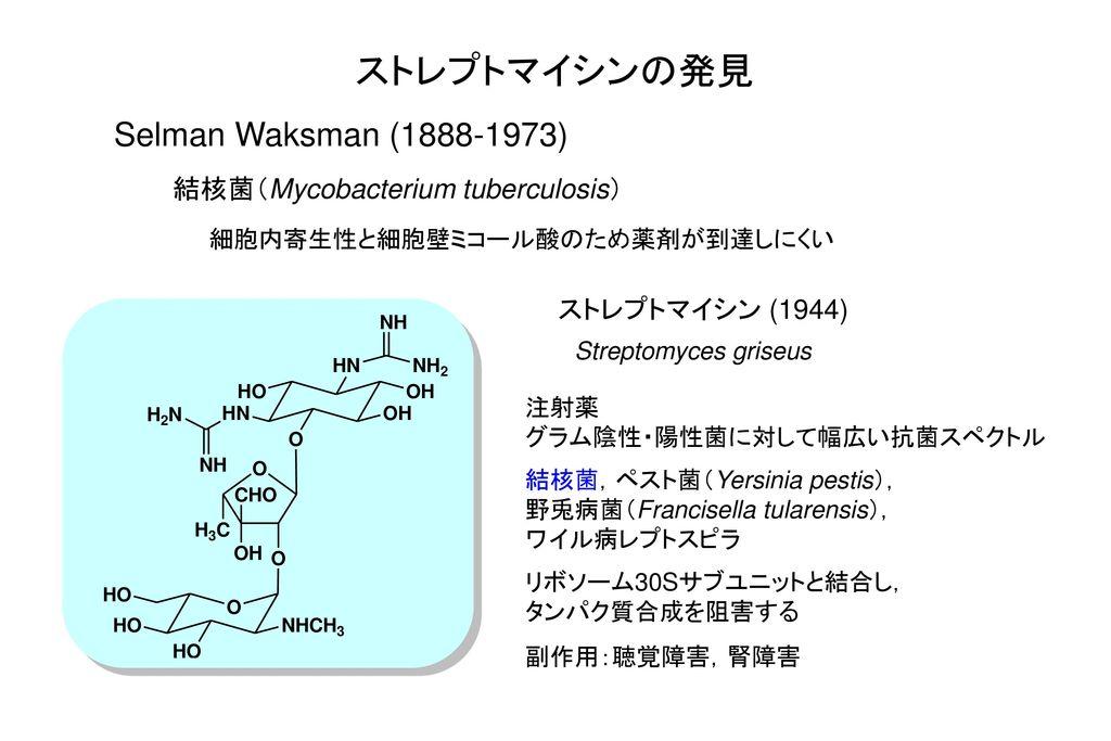 ストレプトマイシンの発見 Selman Waksman (1888-1973)