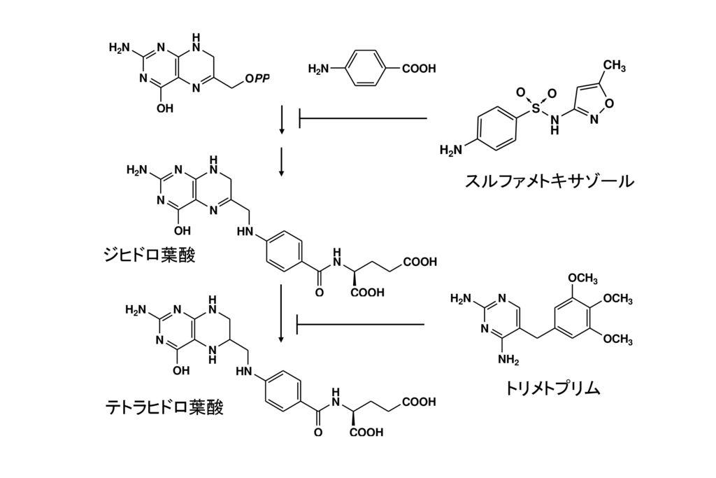 スルファメトキサゾール ジヒドロ葉酸 トリメトプリム テトラヒドロ葉酸