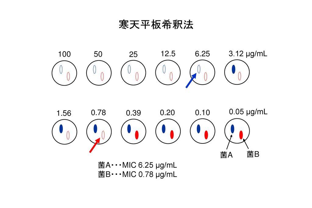 寒天平板希釈法 100. 50. 25. 12.5. 6.25. 3.12 µg/mL. 1.56. 0.78. 0.39. 0.20. 0.10. 0.05 µg/mL. 菌A.