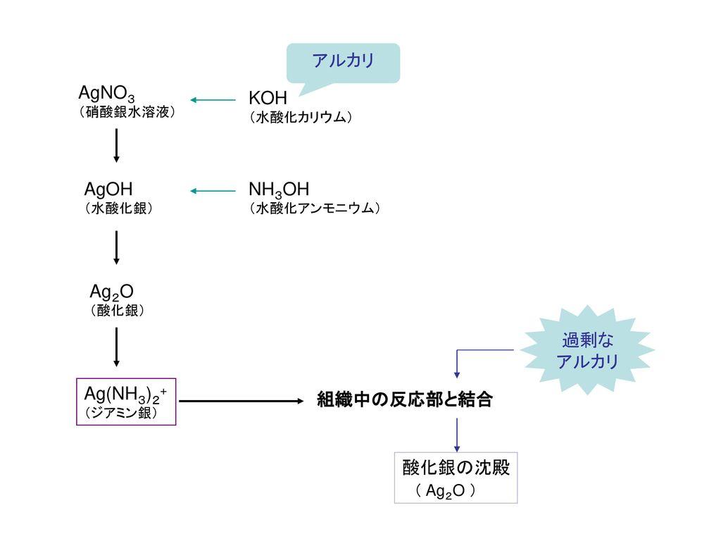 アルカリ AgNO3 KOH AgOH NH3OH Ag2O 過剰な アルカリ Ag(NH3)2+ 組織中の反応部と結合 酸化銀の沈殿