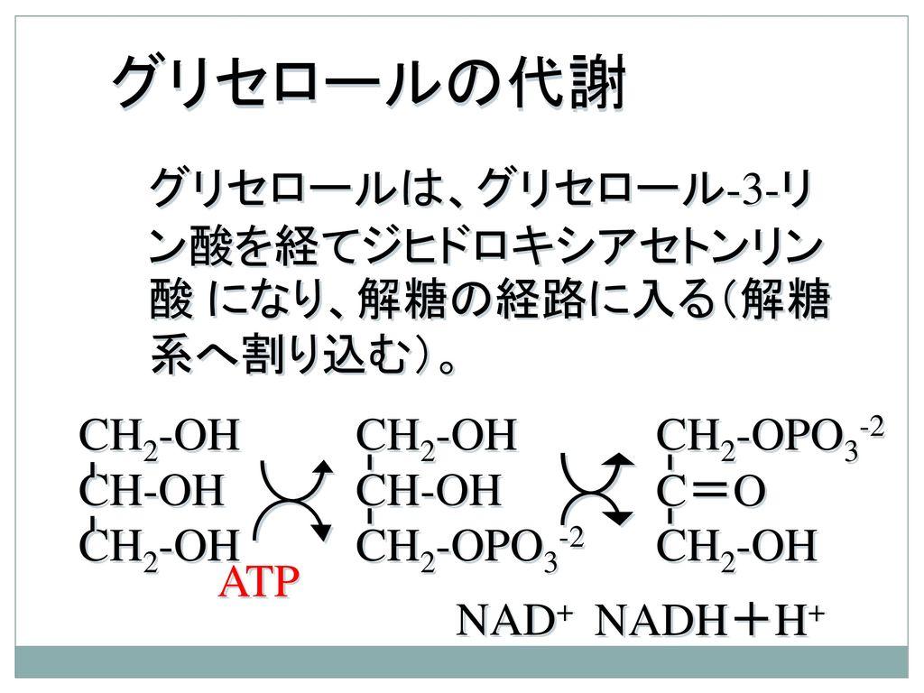 グリセロールの代謝 グリセロールは、グリセロール-3-リン酸を経てジヒドロキシアセトンリン酸 になり、解糖の経路に入る(解糖系へ割り込む)。