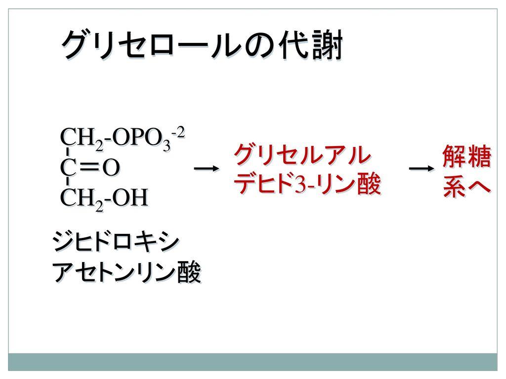 グリセロールの代謝 CH2-OPO3-2 C=O CH2-OH ジヒドロキシ アセトンリン酸 グリセルアルデヒド3-リン酸 解糖 系へ