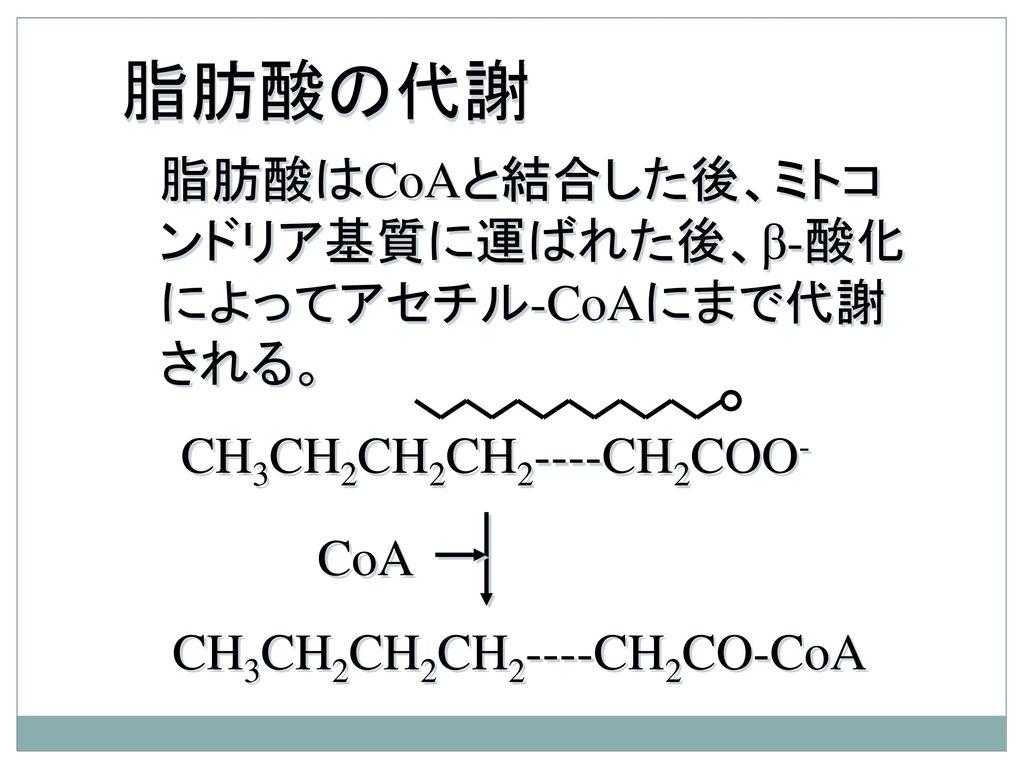 脂肪酸の代謝 脂肪酸はCoAと結合した後、ミトコンドリア基質に運ばれた後、β-酸化によってアセチル-CoAにまで代謝される。