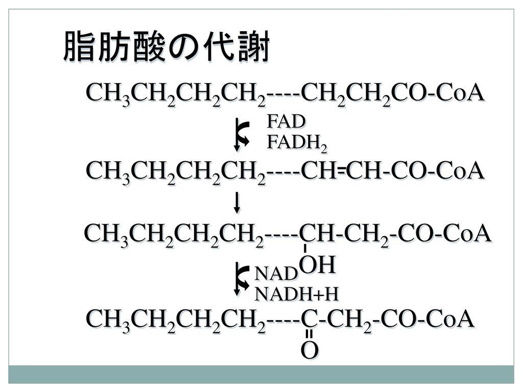 脂肪酸の代謝 CH3CH2CH2CH2----CH2CH2CO-CoA CH3CH2CH2CH2----CH-CH-CO-CoA