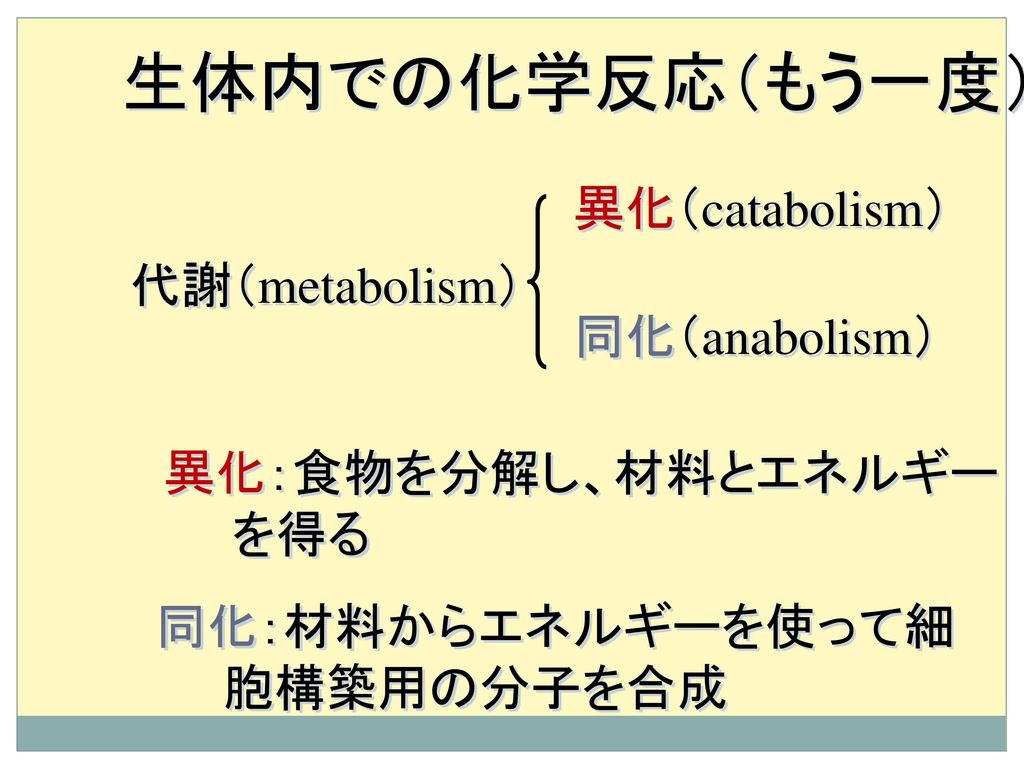 生体内での化学反応(もう一度) 異化(catabolism) 代謝(metabolism) 同化(anabolism)