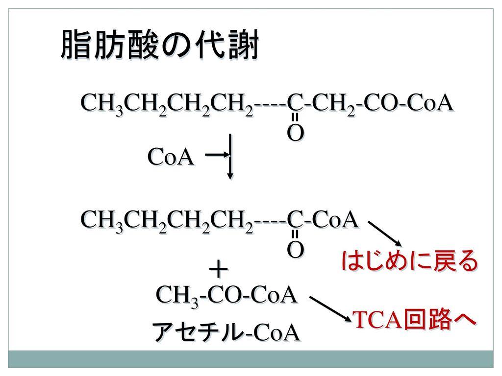 脂肪酸の代謝 CH3CH2CH2CH2----C-CH2-CO-CoA O CoA CH3CH2CH2CH2----C-CoA O