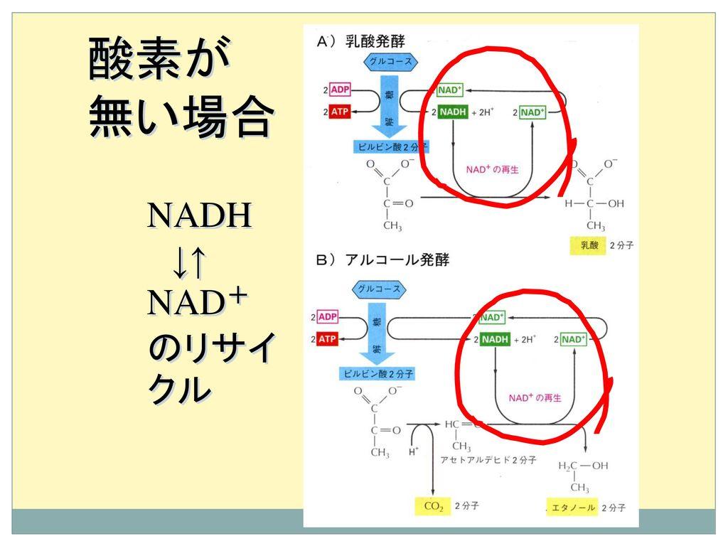 酸素が 無い場合 NADH ↓↑ NAD+のリサイクル