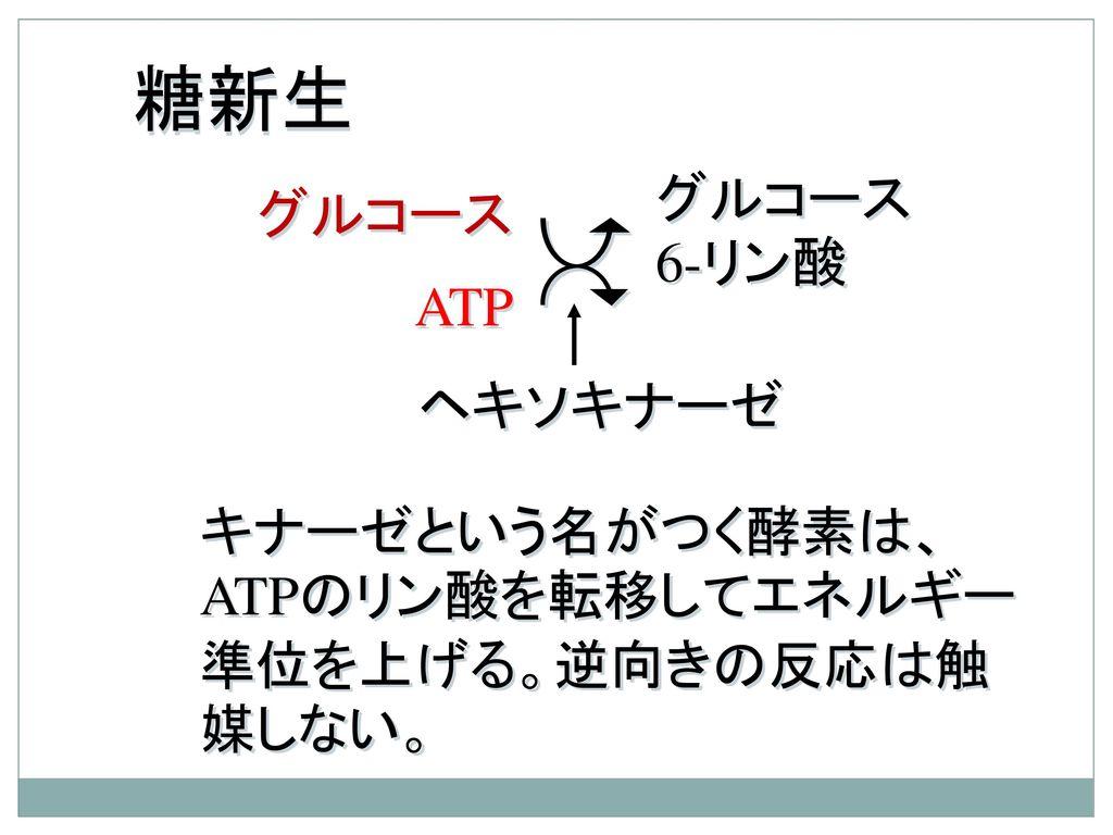 糖新生 グルコース6-リン酸 グルコース ATP ヘキソキナーゼ