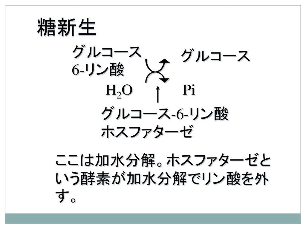 糖新生 グルコース6-リン酸 グルコース H2O Pi グルコース-6-リン酸ホスファターゼ