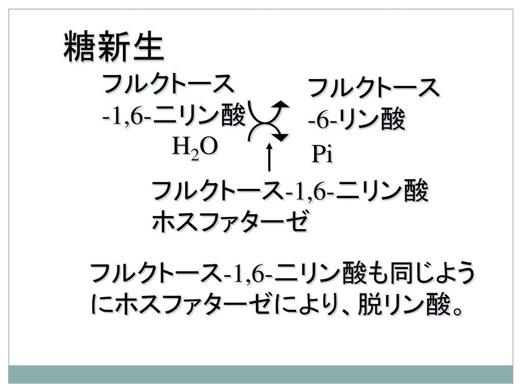 糖新生 フルクトース フルクトース -1,6-二リン酸 -6-リン酸 H2O Pi フルクトース-1,6-二リン酸ホスファターゼ