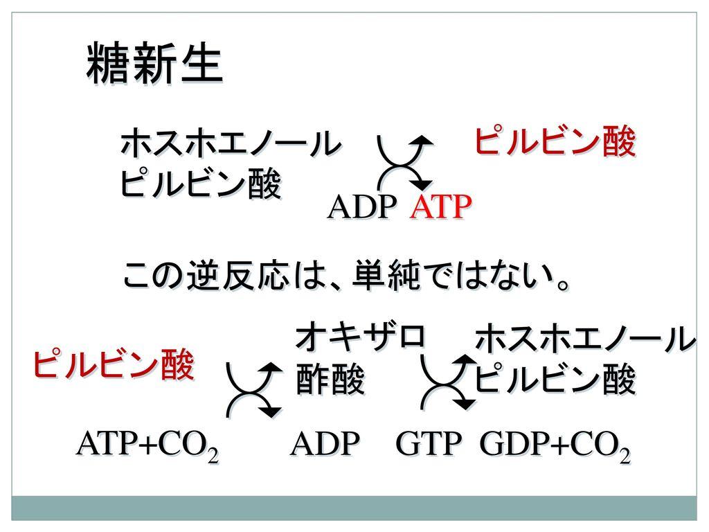 糖新生 ホスホエノールピルビン酸 ピルビン酸 ADP ATP この逆反応は、単純ではない。 オキザロ 酢酸 ホスホエノールピルビン酸