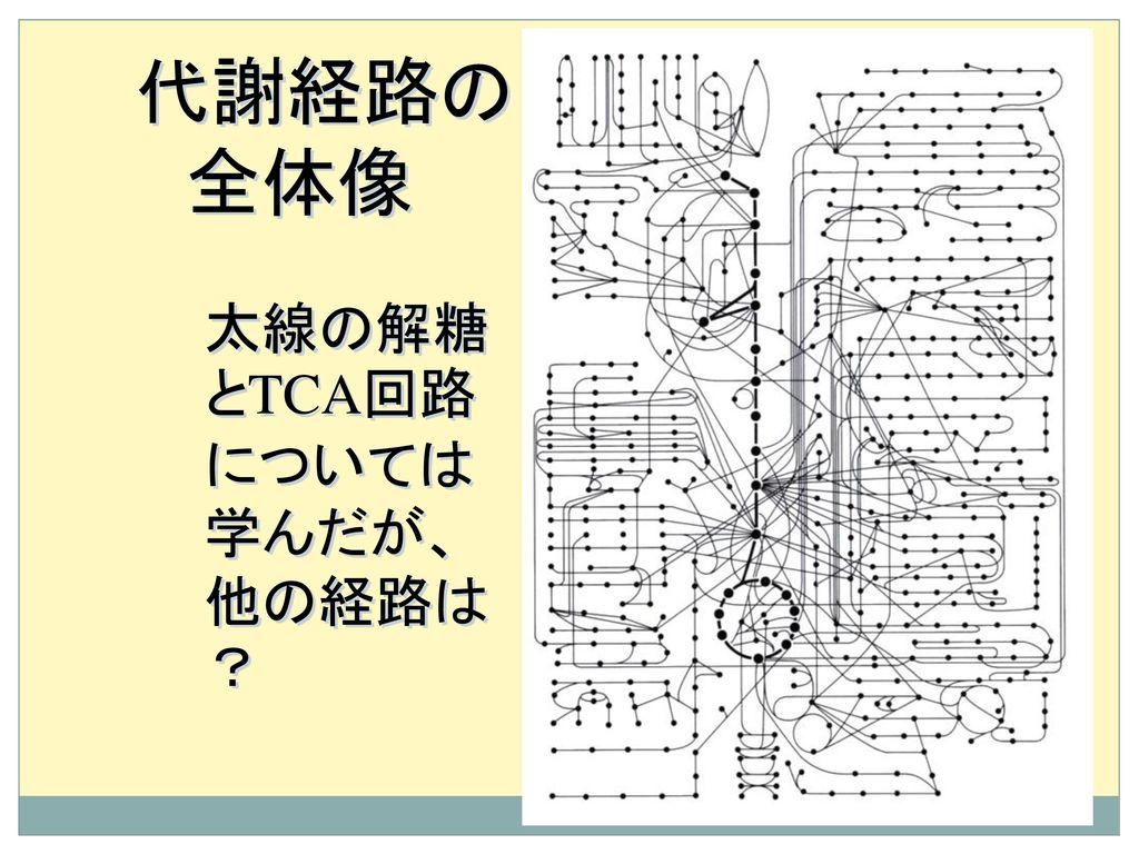 代謝経路の 全体像 太線の解糖とTCA回路については学んだが、他の経路は?