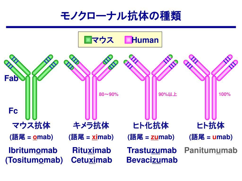 モノクローナル抗体の種類 マウス Human Fab Fc マウス抗体 キメラ抗体 ヒト化抗体 ヒト抗体 Ibritumomab