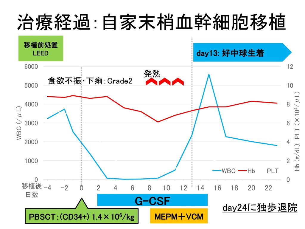 治療経過:自家末梢血幹細胞移植 G-CSF day24に独歩退院 day13: 好中球生着 発熱 食欲不振・下痢:Grade2