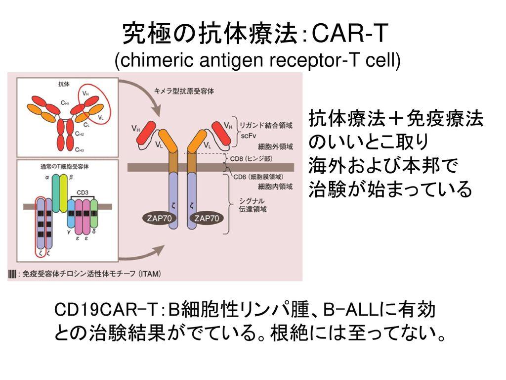 (chimeric antigen receptor-T cell)