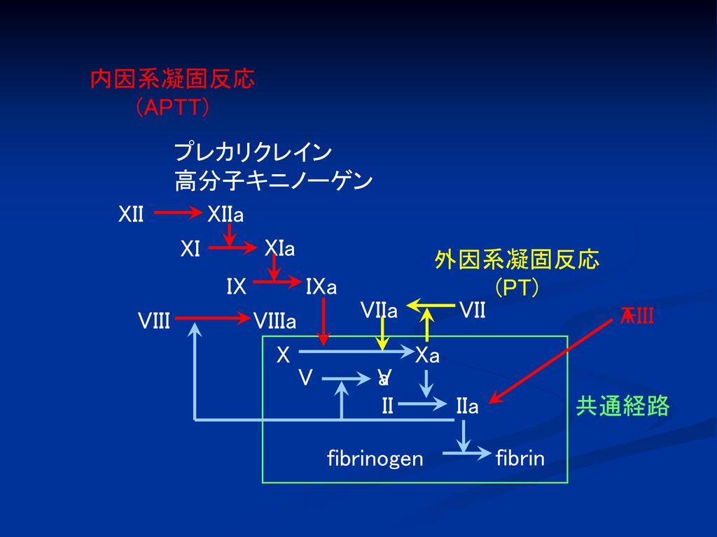 内因系凝固反応 (APTT) プレカリクレイン. 高分子キニノーゲン. XII. XIIa. XI. XIa. 外因系凝固反応. (PT) IX. IXa. VIIa. VII.