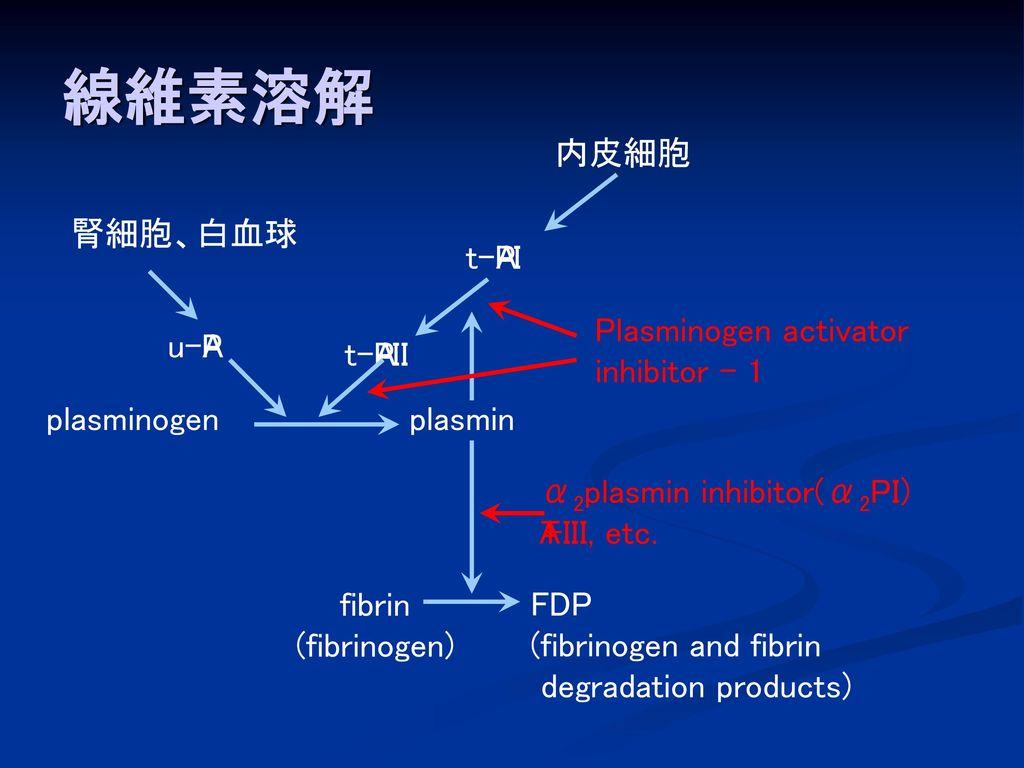 線維素溶解 内皮細胞 腎細胞、白血球 t-PA I Plasminogen activator inhibitor - 1 u-PA