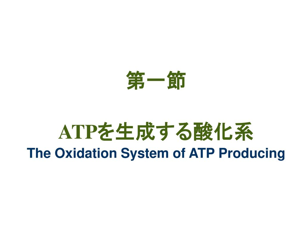 第一節 ATPを生成する酸化系 The Oxidation System of ATP Producing