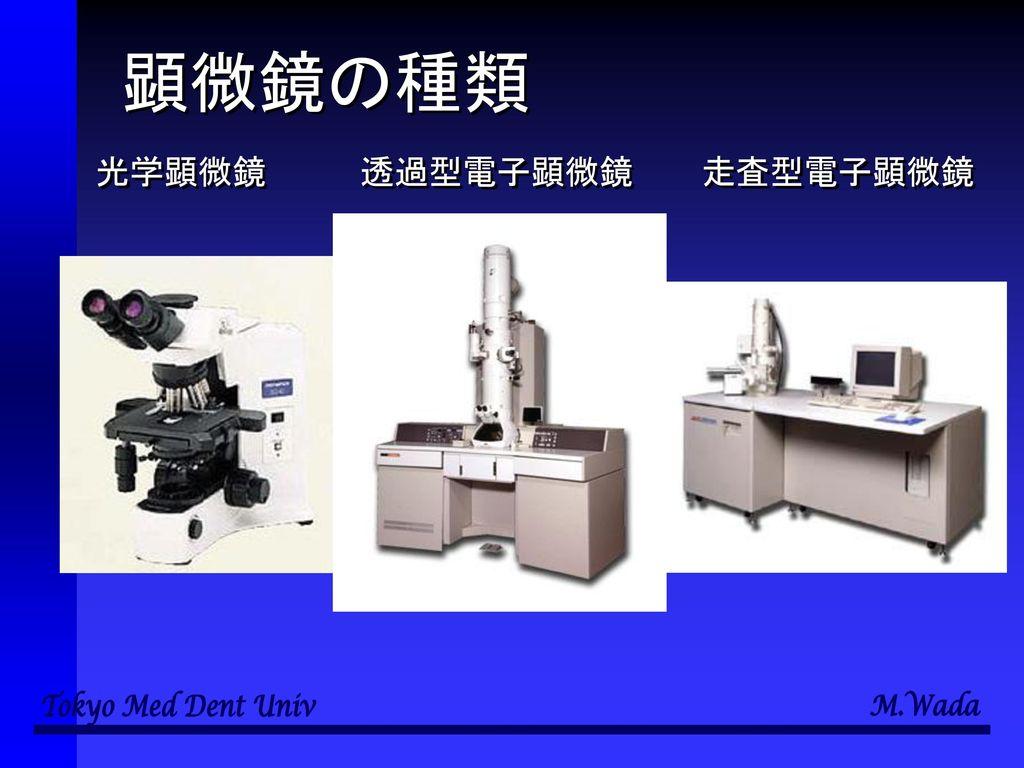 顕微鏡の種類 光学顕微鏡 透過型電子顕微鏡 走査型電子顕微鏡
