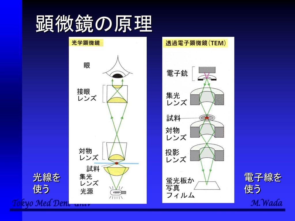 顕微鏡の原理 光線を 使う 電子線を 使う