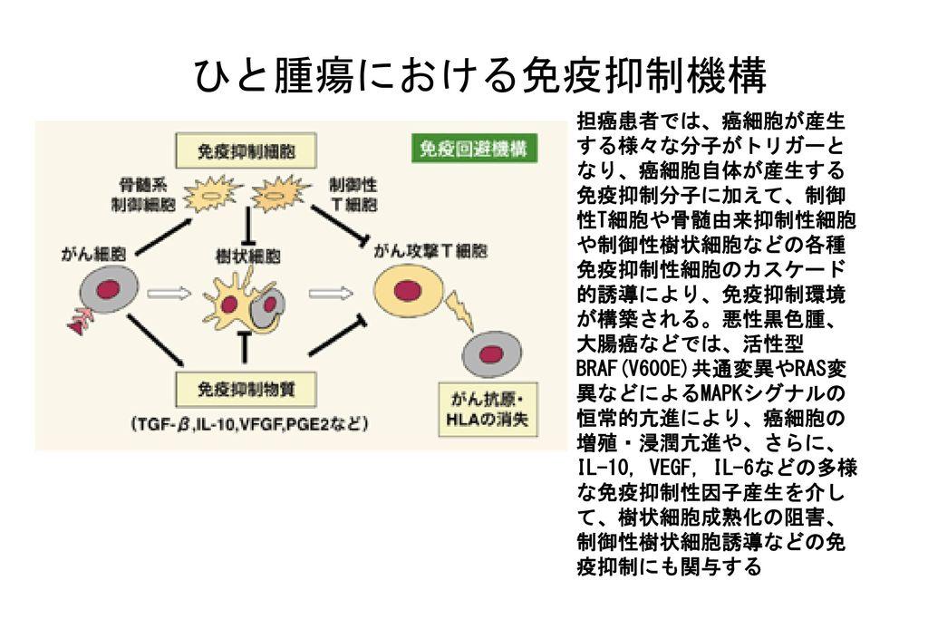 ひと腫瘍における免疫抑制機構