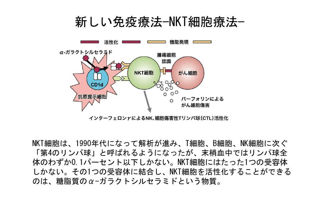新しい免疫療法−NKT細胞療法−