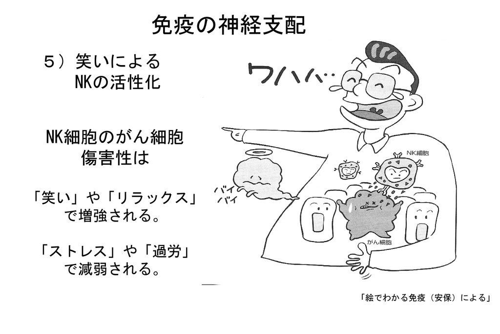 免疫の神経支配 5)笑いによる NKの活性化 NK細胞のがん細胞 傷害性は 「笑い」や「リラックス」 で増強される。 「ストレス」や「過労」
