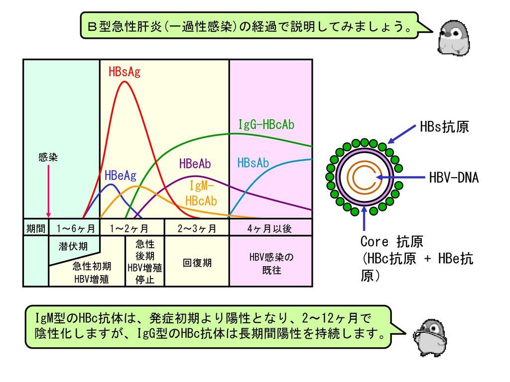HBs抗原 HBV-DNA Core 抗原 (HBc抗原 + HBe抗原) B型急性肝炎(一過性感染)の経過で説明してみましょう。