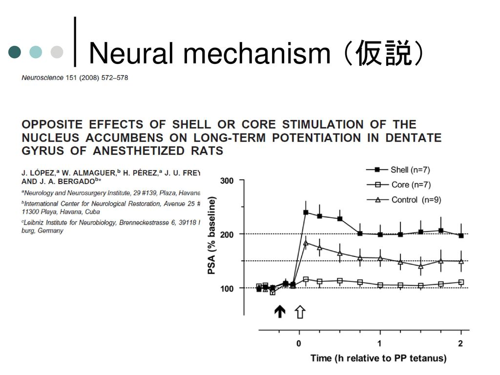 Neural mechanism (仮説)