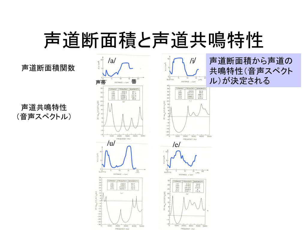 声道断面積と声道共鳴特性 声道断面積から声道の共鳴特性(音声スペクトル)が決定される /a/ /i / 声道断面積関数 声道共鳴特性