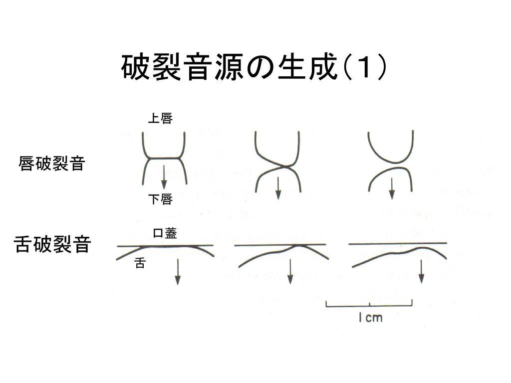 破裂音源の生成(1) 上唇 下唇 舌 口蓋 唇破裂音 舌破裂音