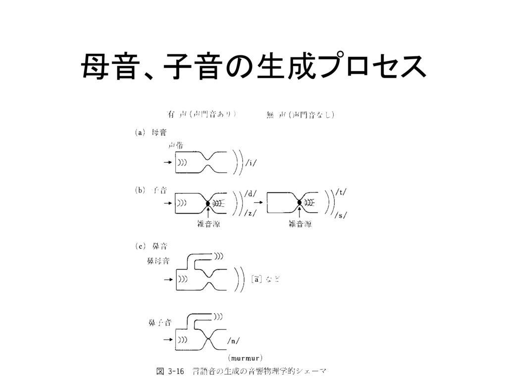 母音、子音の生成プロセス